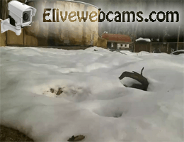 Zoo Ljubljana Erdmännchen webcam Live
