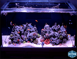 Warren – Aquarium von ReefBum Webcam Live