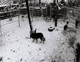 Līči: Tierheim Ulubele – Hunde Webcam Live