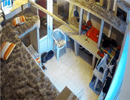 Līči: Tierheim Ulubele – Katzen Webcam Live