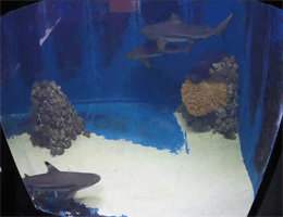 Pula: Aquarium Pula – Sharks Webcam Live
