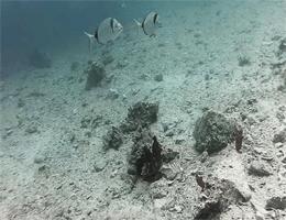 Šibenik – Martinska Unterwasser Webcam Live