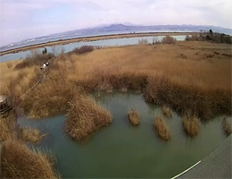 Grado – Natural Reserve on the Isonzo river Webcam Live