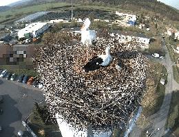 Wasungen – Storchennest Webcam Live