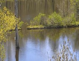 Ithaca – Sapsucker Woods Pond Webcam Live