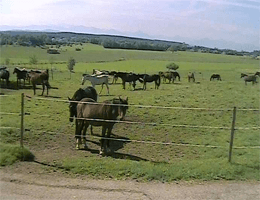 Kaufbeuren Pferdehof DianeWebcam Live