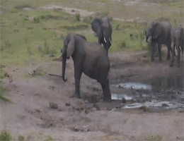 KwaZulu-Natal – Tembe Elephant Park webcam Live
