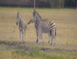Mpumalanga: Kruger Park – Nkorho Pan webcam Live