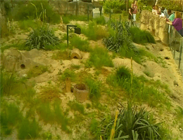 Zoo Zagreb Erdmännchen Webcam Live