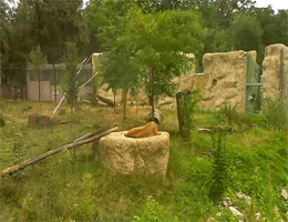 Zoo Zagreb – Löwen Webcam Live