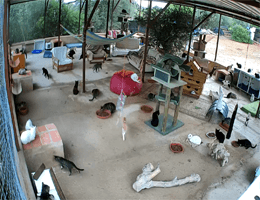 Carvoeiro Katzenrettungszentrum Webcam Live