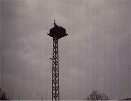 Fohrde (Havelsee) – Storchennest Webcam Live