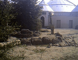 München Elefanten Webcam Live