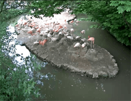 München – Flamingos Webcam Live
