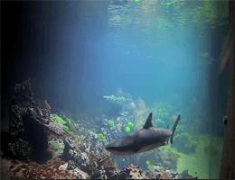München – Haifischbecken Webcam Live