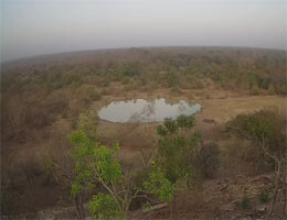 Larabanga Mole National Park Webcam Live
