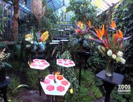 Werribee Zoo Butterfly House Webcam Live