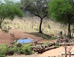 Monduli Tarangire Treetops Webcam Live