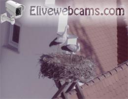 Biberach an der Riß Störche Webcam Live