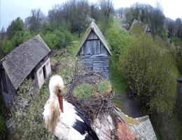 Cigoc Stork Village Webcam Live