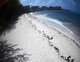 Miami Beach Barbados Webcam Live