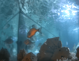 Rogoznica Outdoor Marine Aquarium Webcam Live